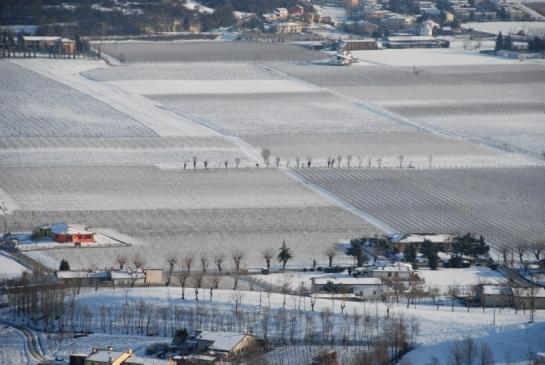 Carbonara con Neve 2