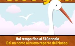 """""""Dai un nome alla cicogna"""": un concorso scolastico per il nuovo reperto del MuseoZannato"""